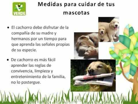 Cuidado de las mascotas youtube - Cuidados de una hortensia ...