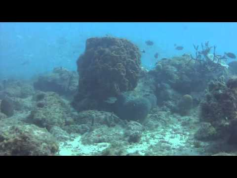 Diveversity Aruba