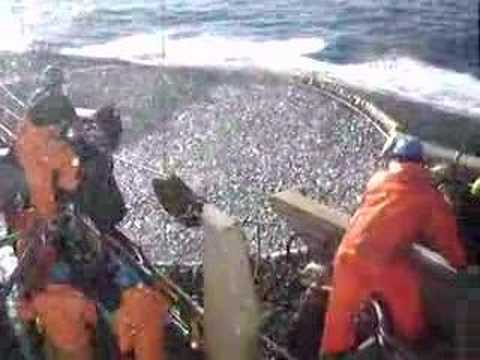 pesqueria del jurel