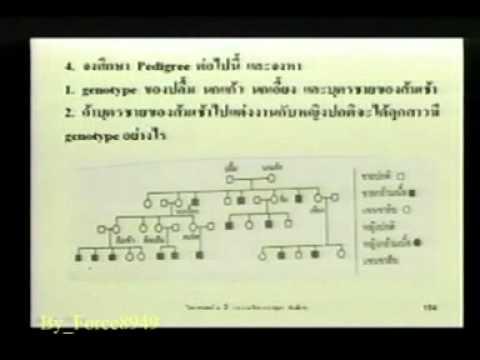 วิทยาศาสตร์ ม 3 ความผิดปกติทางพันธุกรรม สาธิต ม รามฯ Force8949 1 Of 9