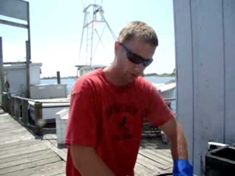 **Cod Bait at Snug Harbor - Point Judith, RI** August 4, 2011.wmv