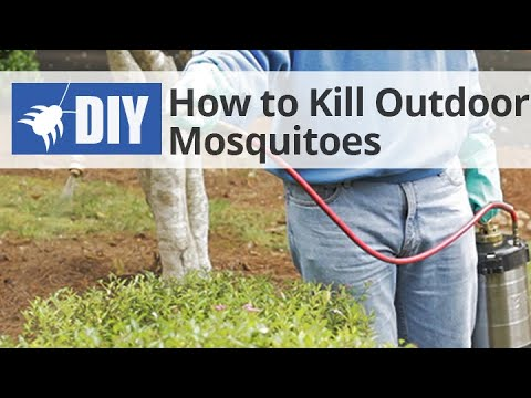How to Get Rid of & Kill Mosquitoes in the Yard - Outdoor ...