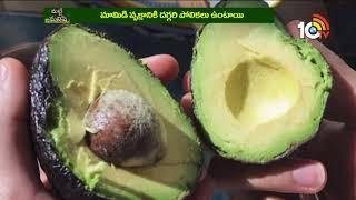 అవకాడో పండు అద్భుతాలు | Avocado Fruit Benefits | Matti Manishi  News