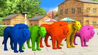 Lion Family finger family nursery rhymes song for Kids,Tiger,cheetha,Arcus N Media Kidz