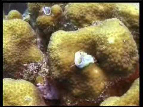 ON THE CORAL REEF IN THE DUTCH ANTILLES