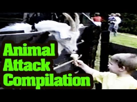 Funny Animals Videos : Funny Animal Attack Compilation 2013