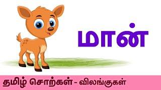Deer (மான்) - Animals (விலங்குகள்) - Learn Tamil Spelling (தமிழ் சொற்கள்) - Preschool For Kids