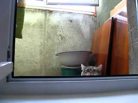Spy cat is watching you