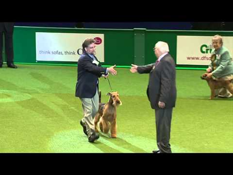 dfs Crufts 2011 Day 3 - Best in Group Terriers