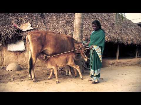 Nandri Dalit Mothers Self Help Groups