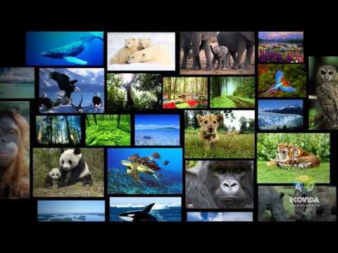 Proyecto ECOVIDA, por la protección del medio ambiente