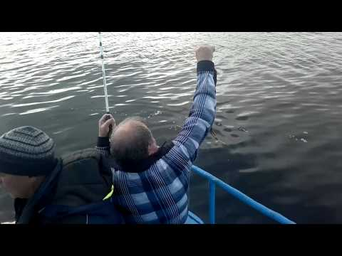 как ловить пикшу в черном море