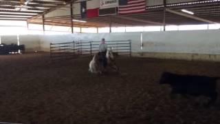 Flash- Jared Lesh Cowhorses