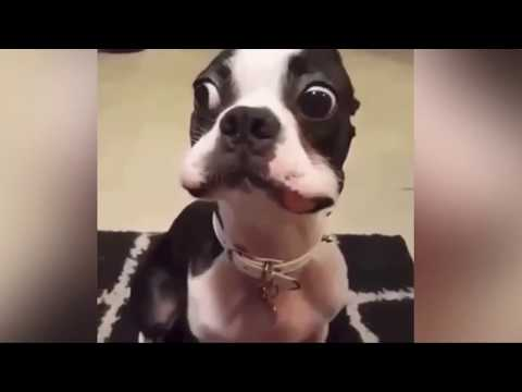 Best Funny Videos DOGS