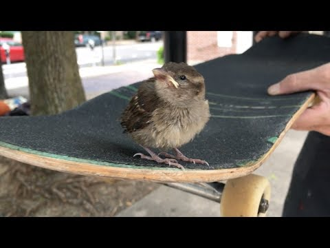 Foam Pit Fun | Street Skateboarding Providence Ri.