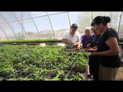 First Nations' Work in Native Food Systems