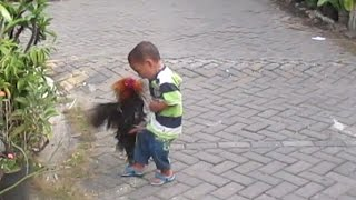 lucu anak kecil berantam  vs ayam jago
