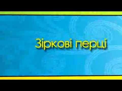 Ролик Звездные Перцы (МС Андрей Дрофа) - ТіК
