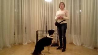Jak przyzwyczaić psa do klatki? - POZYTYWNE SZKOLENIE PSÓW