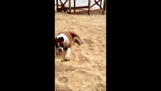 Hilarious puppy reaction to a lime