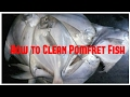 How to Clean Pomfret fish - Paplet fish cleaning - Prepare Pomfret fish ready to cook