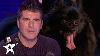 When Simon Cowell Got Hypnotised on Britain's Got Talent | Magicians Got Talent