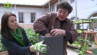 Urban Gardening Teil 1 | Alles über das Gärtnern auf kleinstem Raum