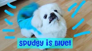 Spudgy
