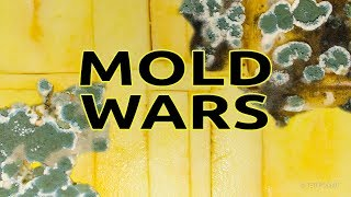 Mold Wars Timelapse