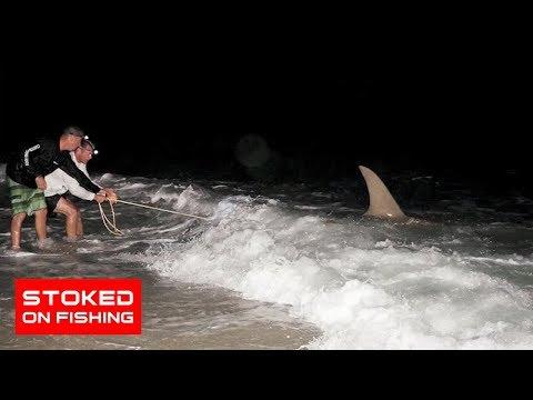 Shark Fishing In Florida, part 2