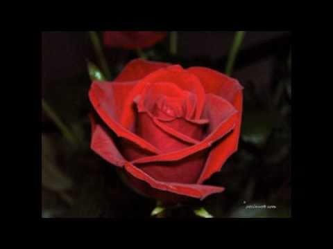 Barbriallen – Angelo Branduardi (Così è se mi pare) 2011 Testo + Video