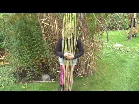 Pflanzen Vermehrung Teil 6. Chinaschilf (Miscanthus). Gärtnertipp Instructions