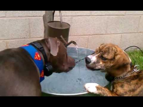 Diy Homemade Endless Water Bowl For Dogs Fountain And