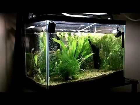 10 gallon fish tank how to clean how to clean out a 10 for How to clean a 10 gallon fish tank