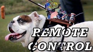 Biohacking a Dog
