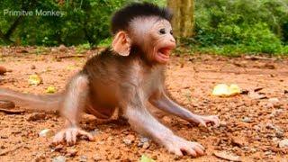 Ah! What's Baby So Terrifying? So Cute Newborn Baby Monkey, Very Lovely Baby Monkey!