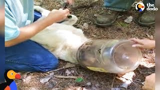 Dog With Bottle Stuck on Head for Weeks Rescued With His Puppies | The Dodo