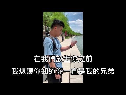 男子想拍下放生寵物龜的感性時刻,但放生後瞬間悲劇 (中文字幕)