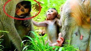 Why mum do like this on baby? Baby look very smart mum so tired, Baby monkey beautiful #1172