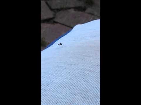 Malaria profilaxy