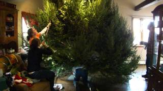 Giant Christmas Tree Crushes Family
