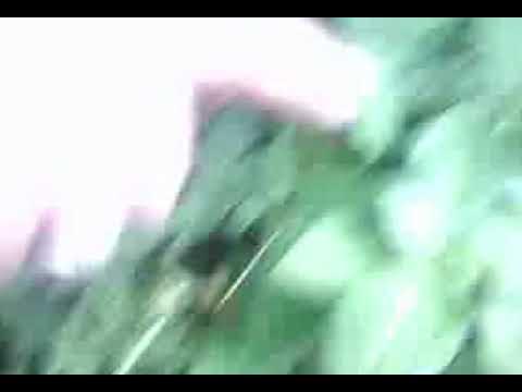 PLANTAS SENCIBLES