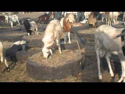 Central Market Livestock Dealers Association