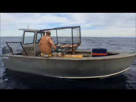 Commercial Snapper Fishing