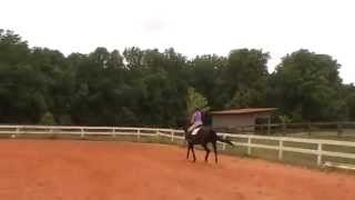 Randi Thompson. Canter. Setting your horse up for the correct lead.  Adding the leg yield. Dressage