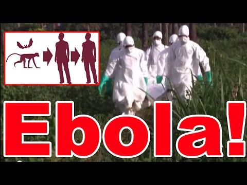 Ebola Virus in West Africa - Outbreak 2014 : 725 Deaths