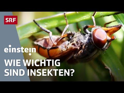 Vom Wert Der Insekten Im Garten - Einstein Vom 19. Mai 2016