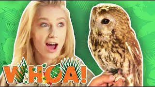 WE LEARN CRAZY OWL FACTS! (Whoa! Nature Show)