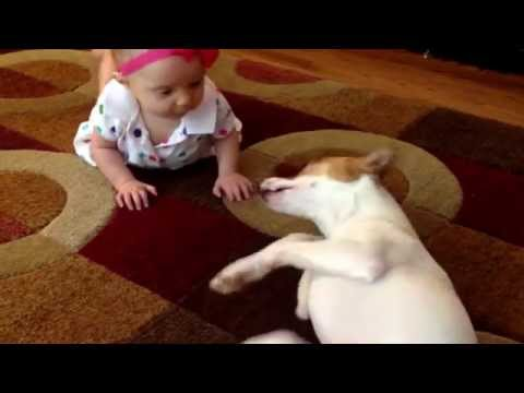 やりとりがめちゃカワイイ☆ 赤ちゃんにハイハイの仕方を教える犬