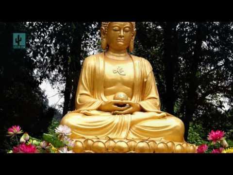 Lời Phật dạy Tuyệt đối không làm điều này nếu không sẽ gánh quả báo rất nặng phúc tu ba đời điều mất